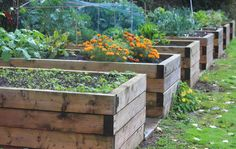 The Techniques And Benefits Of Gardening In Raised Beds  https://www.rodalesorganiclife.com/garden/raised-bed-gardening?utm_source=facebook.com