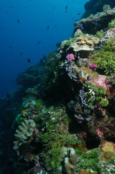 Pohnpei boasts some of the most spectacular reefs in the world.