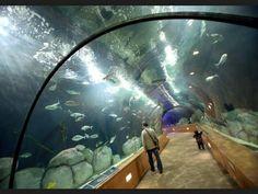 Aquarium de Zaragoza - Expo 2008