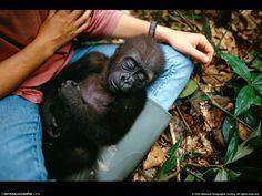 Papeis de Parede Grátis - Humana e animal: http://wallpapic-br.com/national-geographic-fotos/humana-e-animal/wallpaper-38607