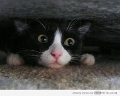 Always check under the sofa....