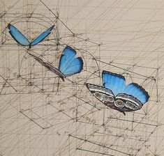 Using only a pencil, ruler and protractor, Venezuelan artist Rafael Araujo creates these beautiful renderings of the three dimensional space butterflies occupy