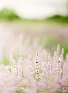 lavendar is favored