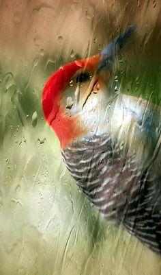 Rainy Days. #birds #bokeh #photography