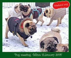 Pug Meeting in Tallinn 12 January 2014 - http://europug.eu/pug-meeting-in-tallinn-12-january-2014/