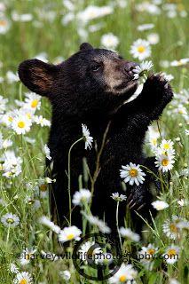 Harvey Wildlife Photography: World Wildlife Fund and Nature's Best Photography Contest
