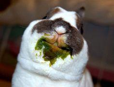 Lolol Rabbit!!