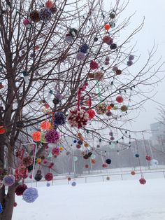 http://portraitsofboston.com/post/76760119558/its-just-for-fun.   http://www.universalhub.com/2014/pom-poms-bloomed-early-common-year