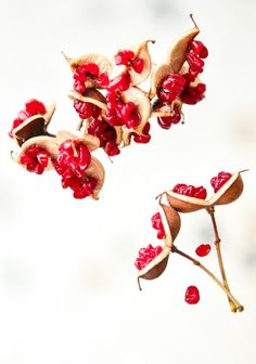 Red Seed by Christina Gkarlaouni, via Behance