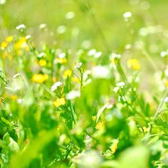 A #colorful #green #patch of #spring under #bright #sunlight #sun #light with #grass and #wild #flowers #white and #yellow captured in #color with #Nikon #d5200 #closeup #ground