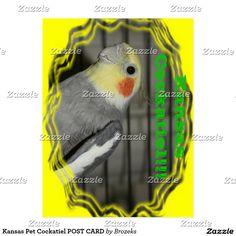 Kansas Pet Cockatiel POST CARD