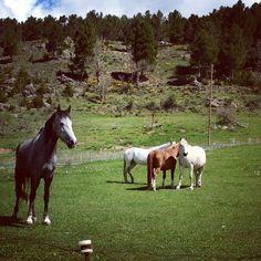 wild horses in #pallarsJussa