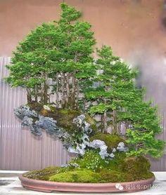 山、石、树皆有灵性,尽现丛林之美