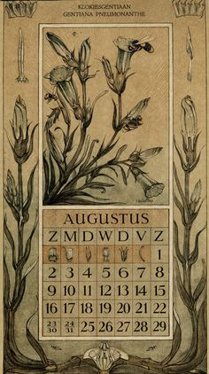 Le Roy, Charles, illustrator. August. Botanische kalender (Dutch botanical calendar). 1925.