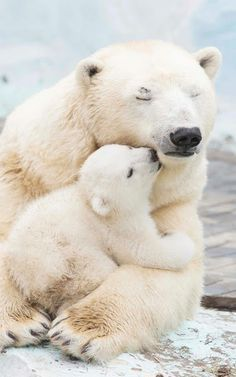 Snuggly polar bears.