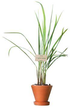 Aprenda a plantar uma horta medicinal