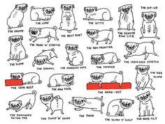 Pug chart