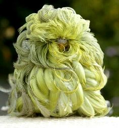 Feather Duster Budgie. П