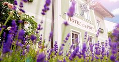 Das Grüne Hotel zur Post ist optimal für einen Urlaub in Salzburg (c) Das Grüne Hotel Zur Post Hotels, Salzburg, Poster, Plants, Central Station, Filling Station, Old Town, Plant, Billboard