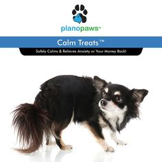Calm Treats - Safe Calming Treats for Dogs - Dog Anxiety Relief - Natural Calming Aid - Helps with Separation Anxiety - Motion Sickness - Storms - Fireworks - Chewing - Barking - Stress - 120 Count Supplements For Anxiety, Pet Supplements, Dog Separation Anxiety, Dog Anxiety, Stress Relief For Dogs, Natural Anxiety Relief, Dog Training Classes, Motion Sickness