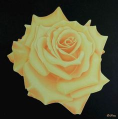 Irma Endrey: Peach rose; oil on canvas