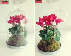 """helloyounglionsxo: """" I make and sell terrariums as a little hobby that makes me happy and I hope makes others happy too :) See more: moss&bone """" Garden Plants, Indoor Plants, House Plants, Saab 900, Make And Sell, Pink Flowers, Glass Vase, Succulents, Jar"""