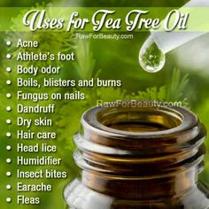 How to Make Tea Tree Oil