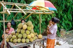 Bali, Buleleng, Singaraja. A family selling durian south of Singaraja. The taste of this characteristic fruit is definitely better than its smell. COPYRIGHT: © Bjorn Grotting