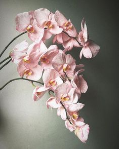 I'm just having a moment for these incredible Peach Royal Phalenopsis Orchids . They're not as spectacular as you'd… Heavenly, Orchids, Floral Wreath, Peach, The Incredibles, Wreaths, In This Moment, Studio, Decor