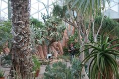 From the Arid Dome in Milwaukee Wi.