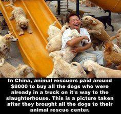 Animal Rescue Center