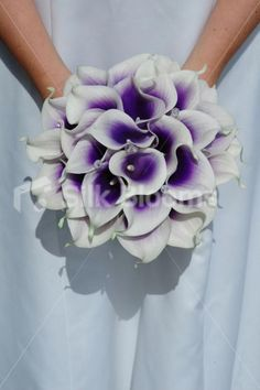 Vibrant Bridal Bouquet with Purple Centred White Picasso Lilies. Love the bouquet White Lily Bouquet, Lily Bouquet Wedding, Calla Lily Bouquet, Purple Wedding Bouquets, Lily Wedding, Bride Bouquets, Our Wedding, Wedding Flowers, Dream Wedding