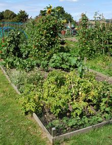 How to plan an allotment