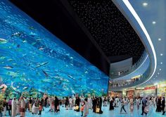 Largest fish tank in the world... Dubai