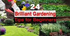 If you started gardening recently and tag yourself as a beginner then these '24 Gardening Tips for Beginners' are useful for you.