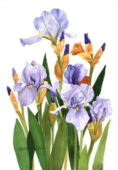 "Iris Field Watercolor Garden A reproduction of an original watercolor painted by Wanda Zuchowski-Schick of purple iris. It depicts an image of purple iris in a garden setting and measures 6"" x 9"". The artwork can easily be matted and placed in a 11"" x 14"" frame. The vibrant color will enhance the decor in any room. The artwork is shipped unmatted and unframed."
