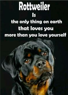 """Acquire great tips on """"rottweiler puppies"""". They are actually available for you on our internet site. Rottweiler Training, Puppy Obedience Training, Rottweiler Puppies, German Rottweiler, Rottweiler Quotes, Rottweiler Pictures, Rottweiler Facts, Yorkie Puppies, Dog Cat"""