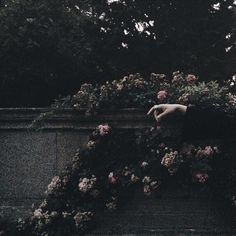 persephone, gray gardens, sylvia plath, midnight garden, so Gothic Aesthetic, Slytherin Aesthetic, Witch Aesthetic, Aesthetic Pastel, Flower Aesthetic, Aesthetic Gif, Aesthetic Vintage, Yennefer Of Vengerberg, Arte Obscura