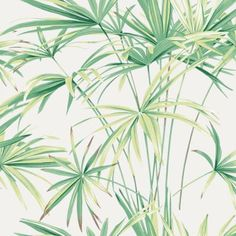 The wallpaper Maison Celine - from Decor Maison is a wallpaper with the dimensions x m. The wallpaper Maison Celine - belongs to the p Tropical Wallpaper, Home Wallpaper, Celine, Green Lounge, Book Background, Natural Bathroom, Drops Patterns, Designers Guild, Nautilus