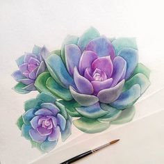 Echeveria Done ? Succulents Drawing, Watercolor Succulents, Colorful Succulents, Watercolor Flowers, Drawing Flowers, Pink Succulent, Painting Flowers, Succulents Painting, Succulents Wallpaper