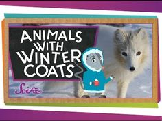 Arctic Animal Videos - Simply Kinder