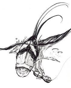Roosterfish www.GregLowmanArt.com Instagram - @greglowman