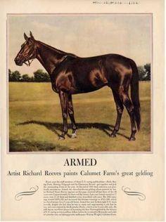 Calumet farms great gelding in the 1940s, Armed, as painted by Richard Reeves.