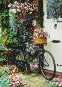 The Bicycle At Lavender Cottage Art Print by MGL Meiklejohn Graphics Licensing. All prints are professionally printed, packaged, and shipped within 3 - 4 business days. Choose from multiple sizes and hundreds of frame and mat options. Bicycle Decor, Bicycle Art, Bicycle Design, Arte Do Mickey Mouse, Bike Planter, Bicycle Pictures, Diamond Picture, Lavender Cottage, Tapestry Kits