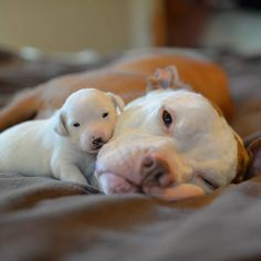 Mama and baby.... So sweet....