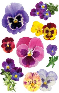 Paper House Productions - Garden Collection - 3 Dimensional Cardstock Stickers with Glitter and Jewel Accents - Pansies Botanical Art, Botanical Illustration, Flower Cards, Paper Flowers, Watercolor Flowers, Watercolor Paintings, Pansy Tattoo, Flower Tattoos, China Painting