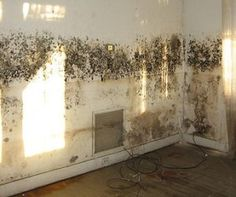 How To Remove Mold Prevent Growth And Mildew Vs There Are Several