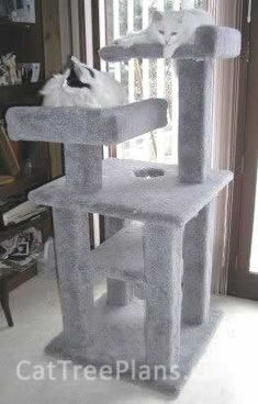 1000 ideas about cat condo on pinterest cat trees cat for Do it yourself cat condo