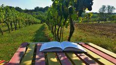Pracoviště v Horoměřicích s výhledem na vinici
