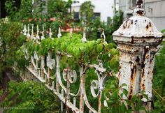 Love this distressed white wrought iron fence! Love this distressed white wrought iron fence! Garden Gates And Fencing, Garden Arbor, Garden Junk, Fence Gate, Balcony Garden, Old Gates, Iron Gates, Cottage Garden Design, Cottage Gardens